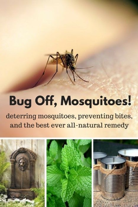 Here are four ways to deter and prevent mosquitoes and one remedy to stop itching bites if the mosquitoes do get you!   Mosquitoes may be tiny but they sure can be a big problem.
