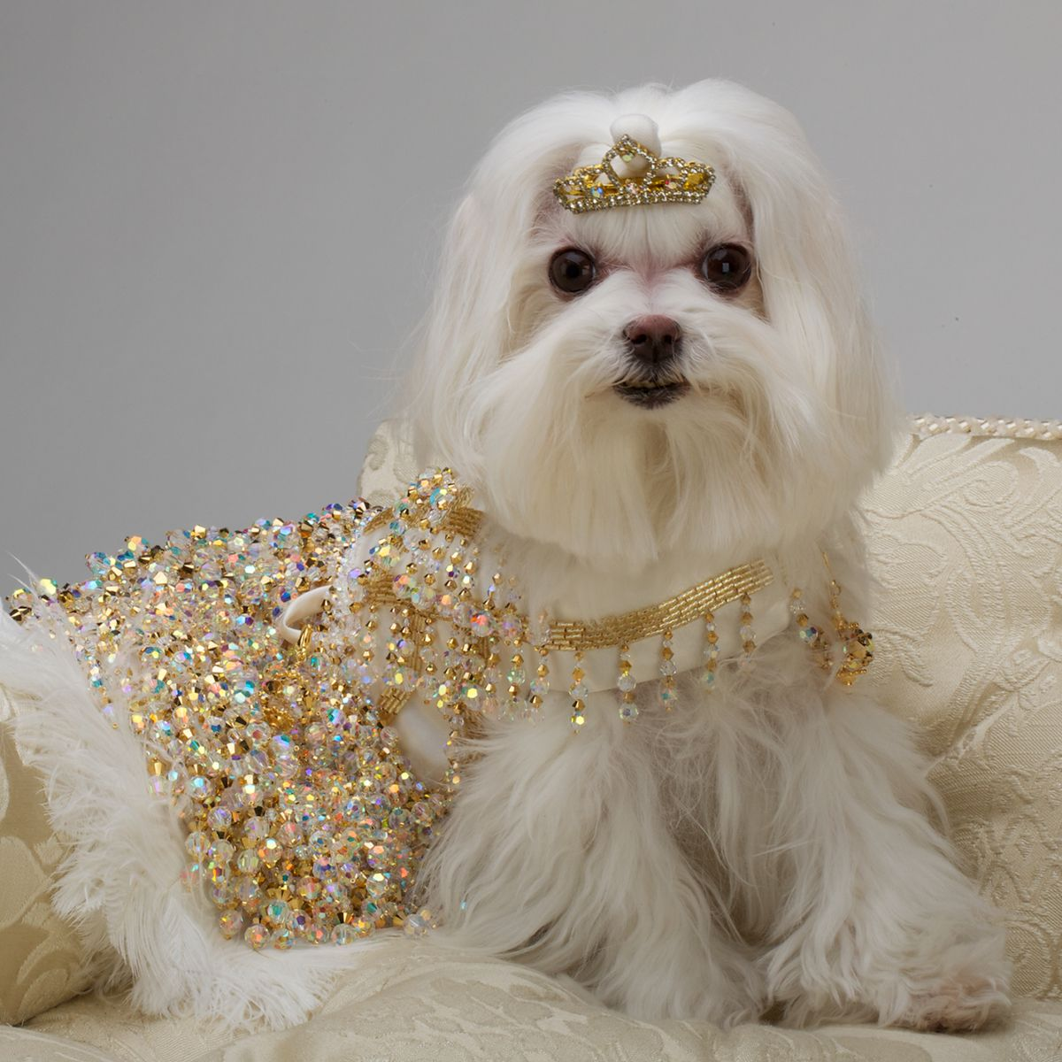 The Gilt Gown From Chien Coature Dog dresses, Pet