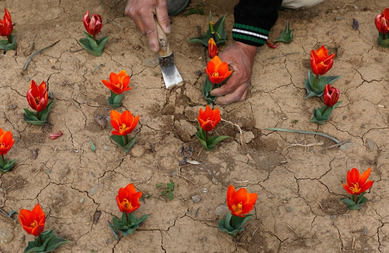 "fotojournalismus: "" A gardener works in the tulip garden on the ..."
