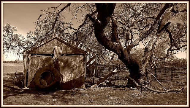 Old Sheds and Sheep Yards - Sepia by firedoc02, via Flickr