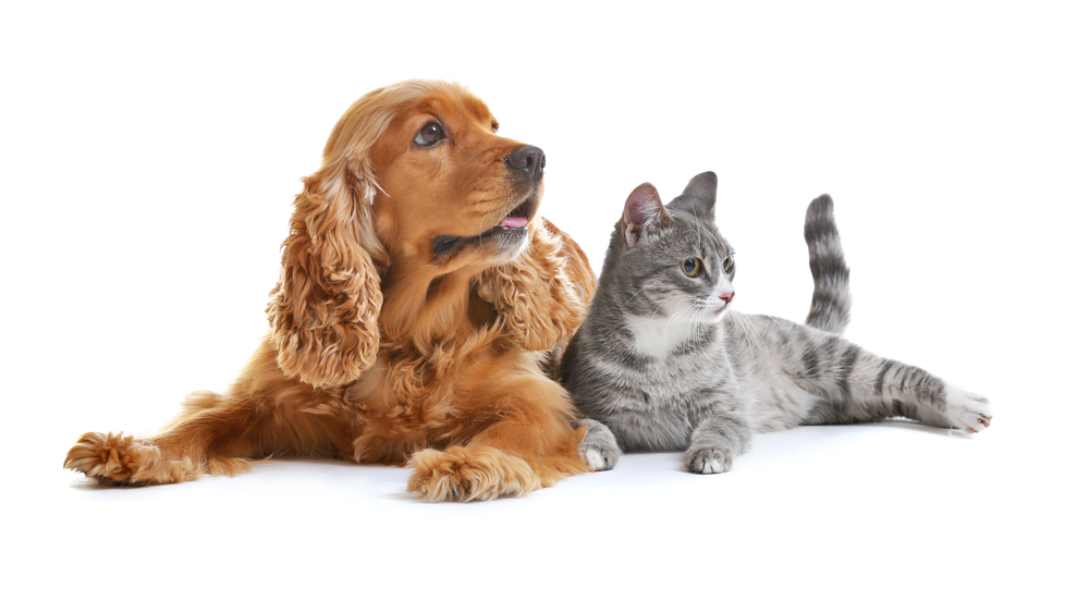Cute Dog Cat Together On White Cute Cats And Dogs Cute Dogs Dog Wash