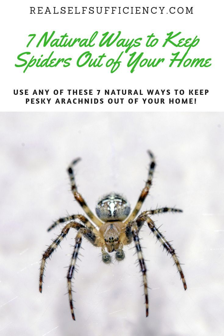 7 Natural Ways To Keep Spiders Out Of Your Home Reduce