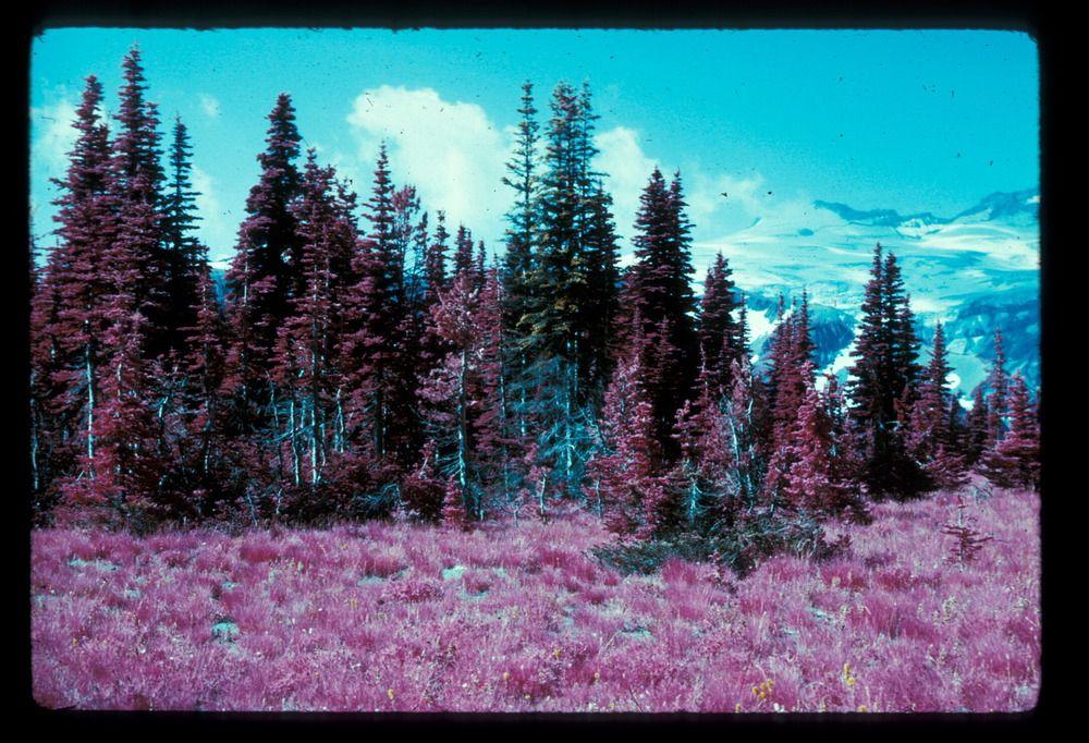 NPGallery Asset Detail Mount rainier national park