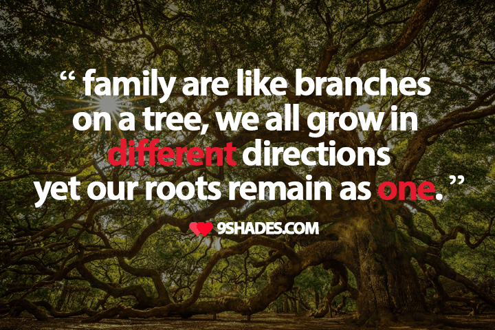 Like Branches On A Tree We All Grow In Different Directions Yet Our Roots Remain As One Family Quotes Wallpaper Quotes For Whatsapp Whatsapp Status Quotes