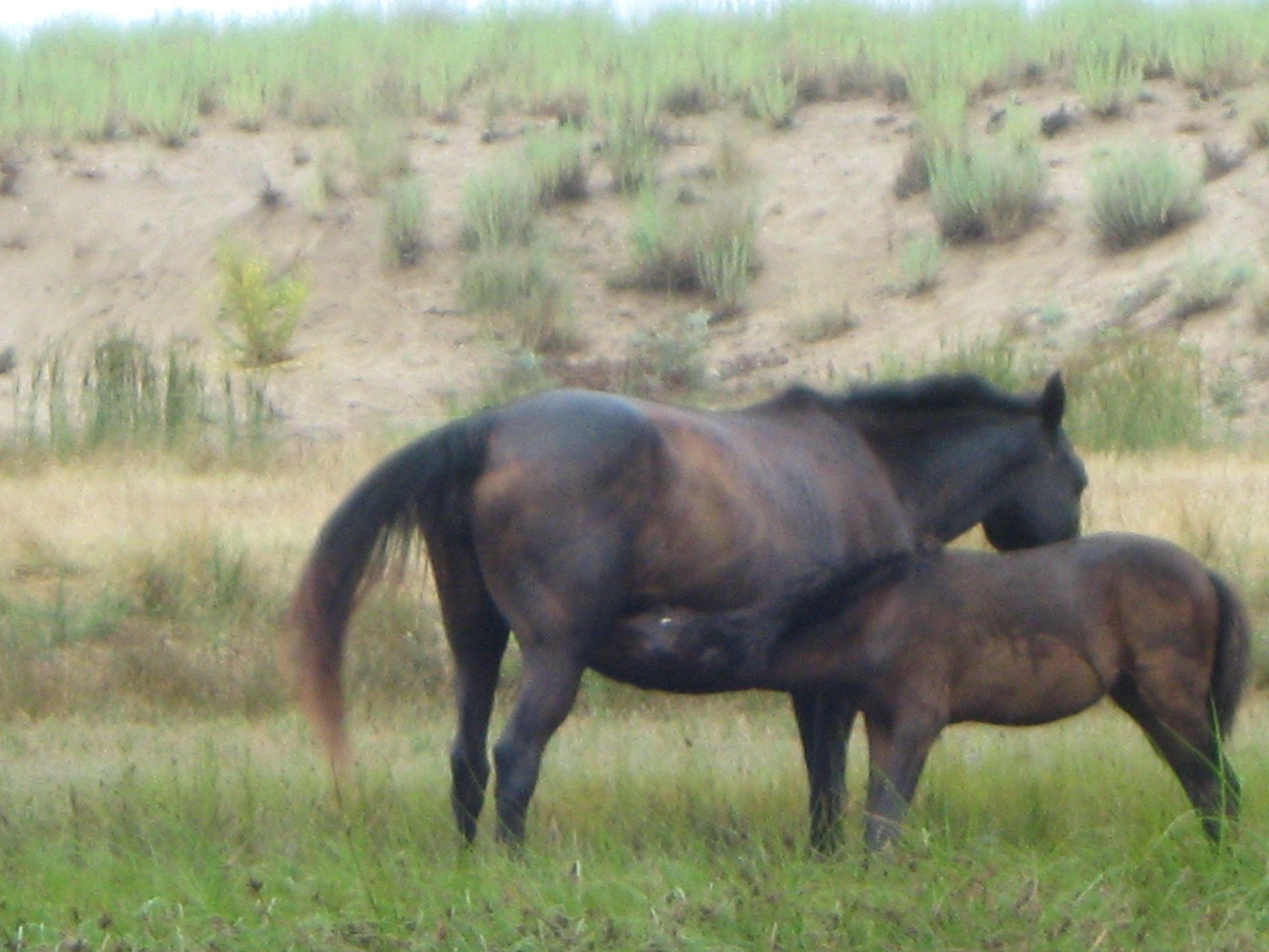 Lovely horses in Bulgaria