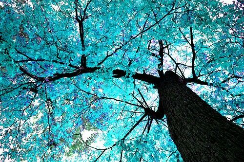 Fall Heart Leaves Background Wallpaper Blue Blossom Tree Pretty Pictures Blossom Trees
