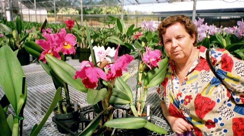 Orchid Nursery In Hilo