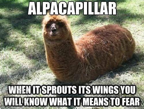 alpacaplillar