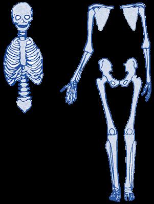 ايقاظ علمي سنة خامسة أجزاء الهيكل العظمي وأنواع العظام Character Disney Characters Disney