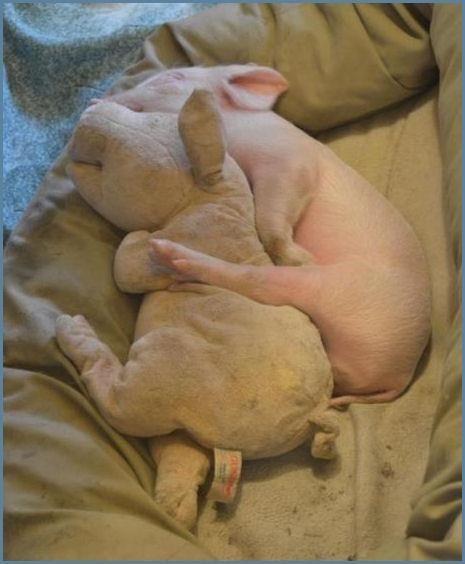 Cuddling. Had to pin this!