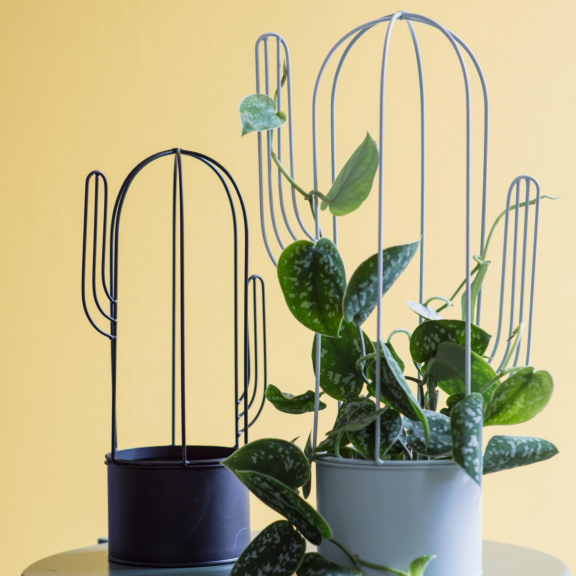 Des Pots De Fleurs Cactus Truffaut Greenpower Cactus Flower Pot Designs Cactus