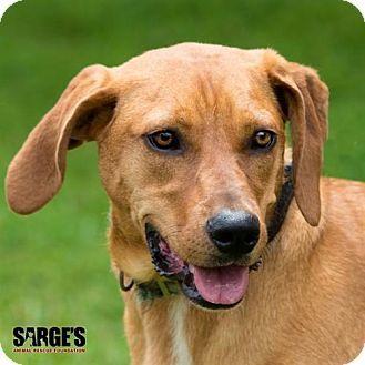Waynesville Nc Redbone Coonhound Mix Meet Lola A Dog For
