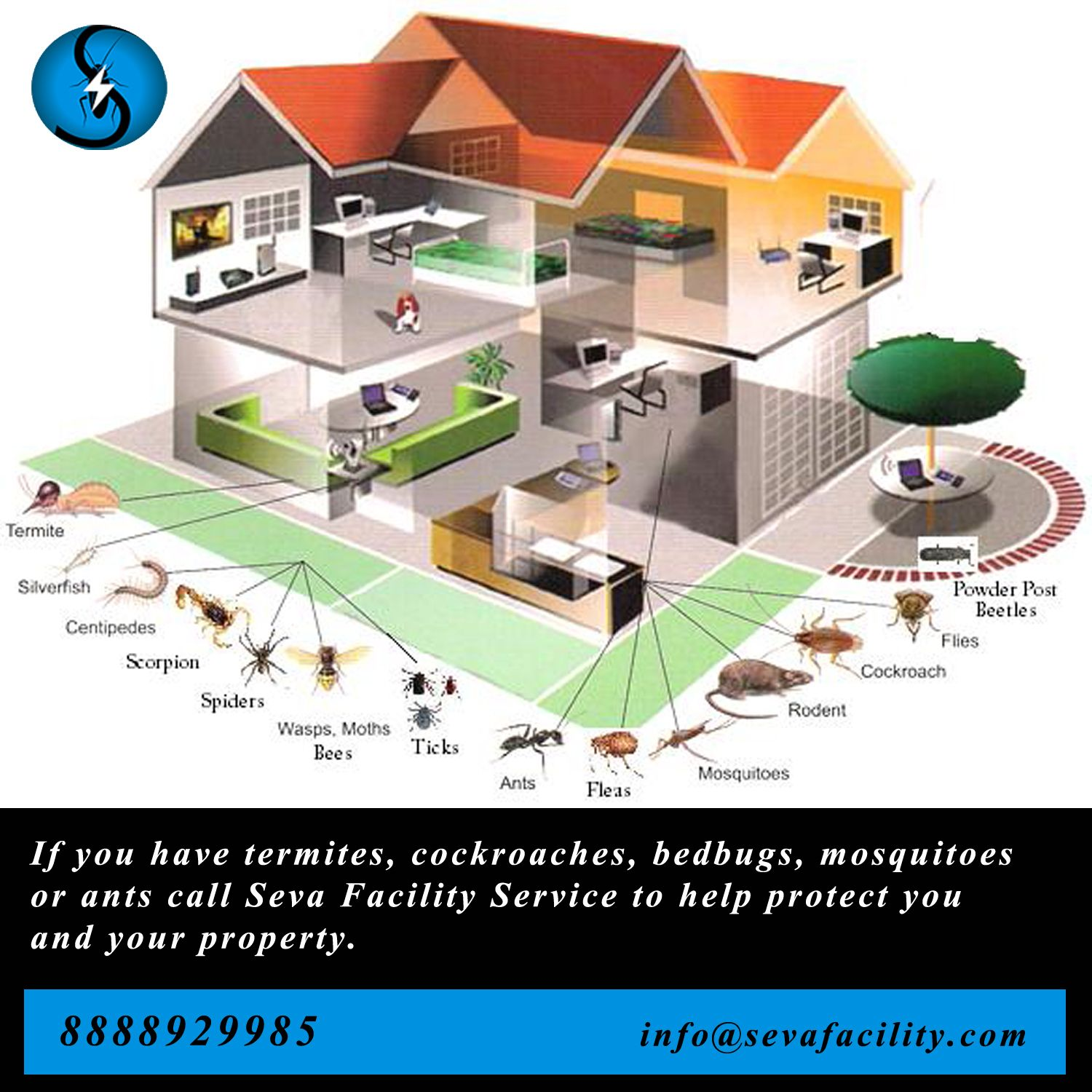 If you have any pest , call Seva Facility Service to