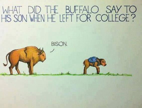 ... <b>Funny</b> <b>Jokes</b> , <b>Funny Pictures</b> // Tags: <b>Funny</b> Buffalo <b>joke</b> // August