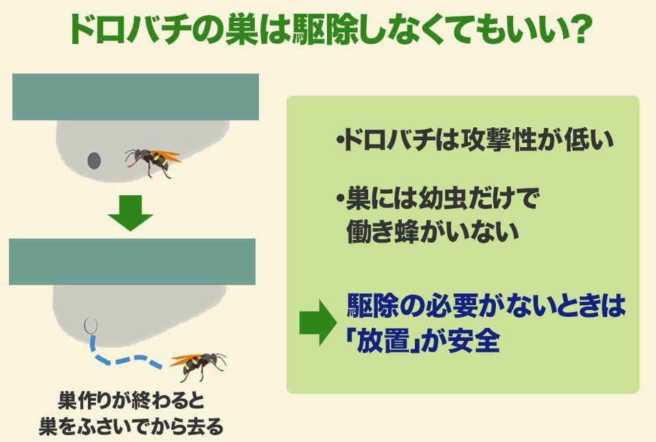 土でできた蜂の巣の駆除はどうやる ドロバチとオオスズメバチの巣の違いも解説 生活救急車 オオスズメバチ 蜂の巣 解説