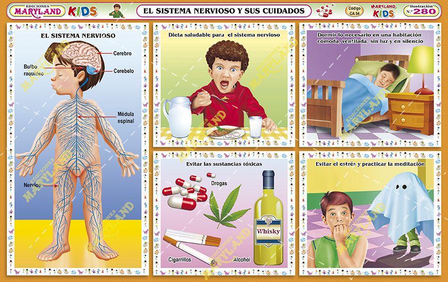 Gata El Cuidado Del Cuerpo: 280. El Sistema Nervioso Y Sus Cuidados