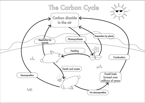 Carbon cycle worksheet high school switchconf image result for carbon cycle diagram education pinterest ccuart Choice Image