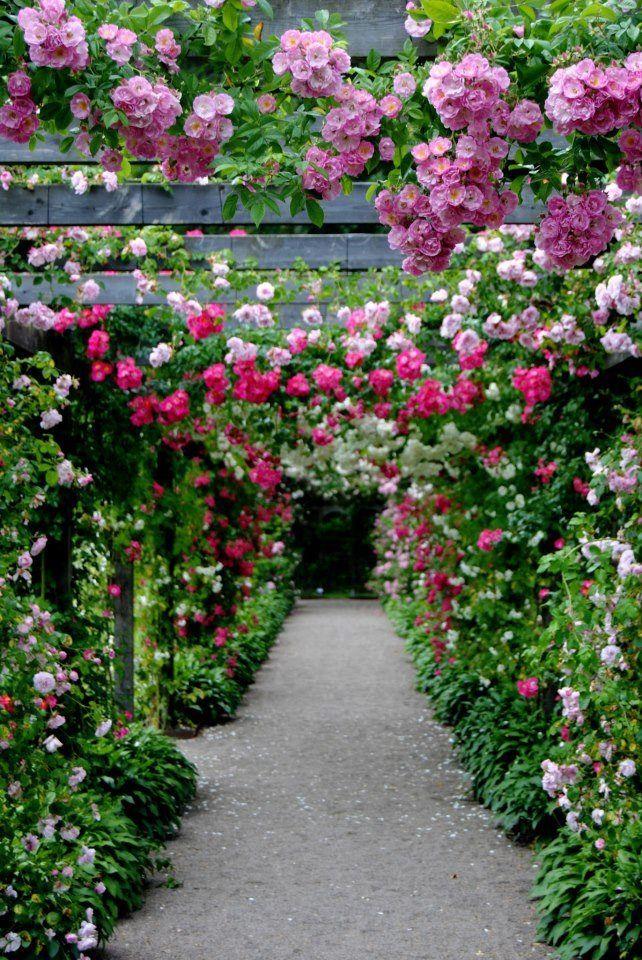 Rose Arbor Garden Inspiration Garden Arches Flower Garden