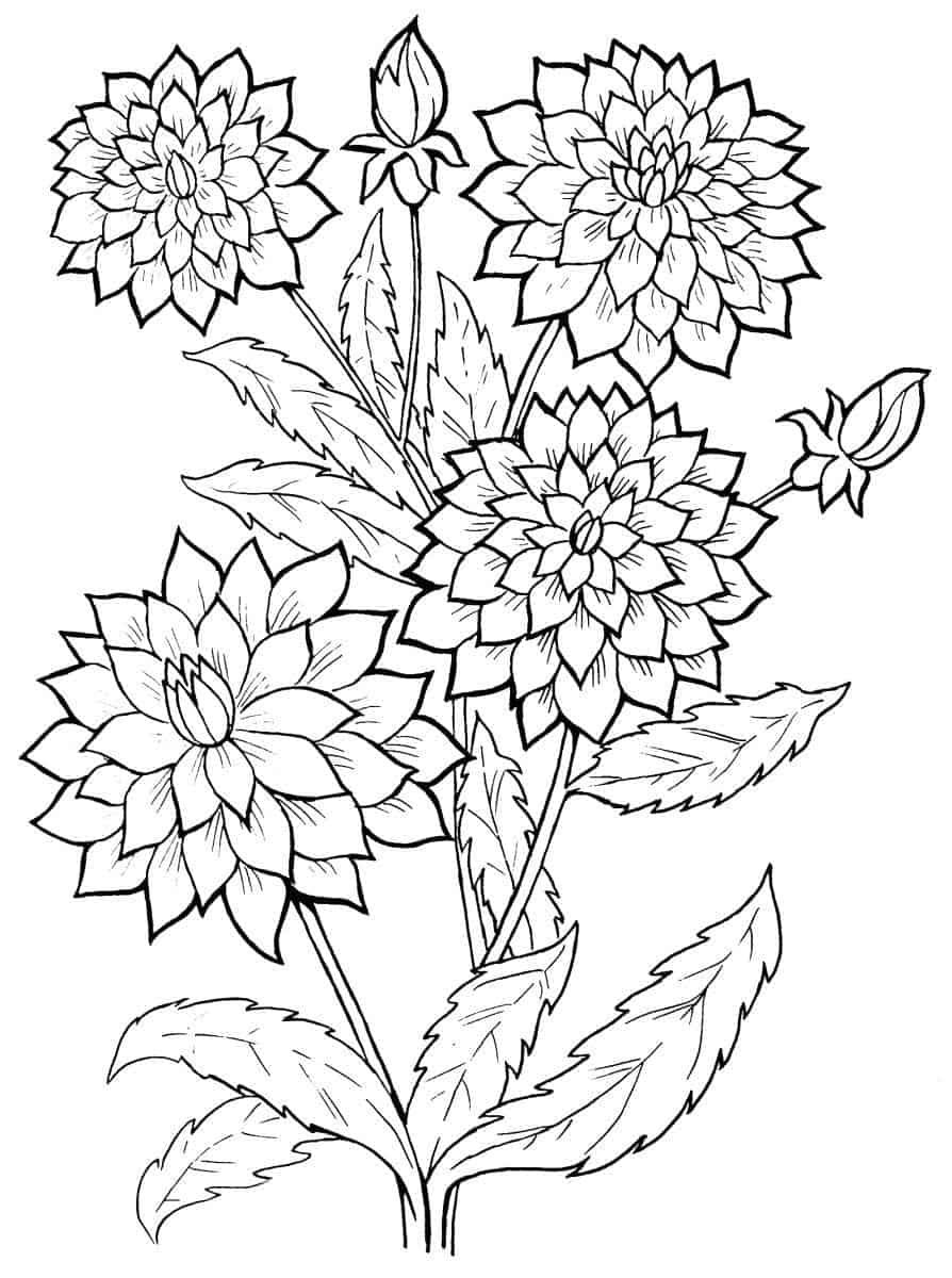 Flower Easy Coloring Pages For Adults Taken