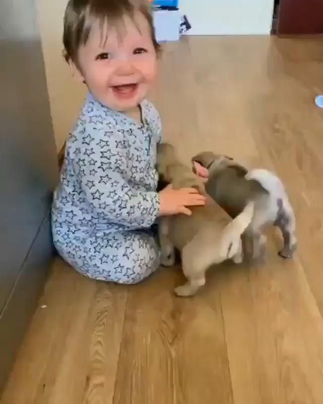 Happy puppy meet cute baby