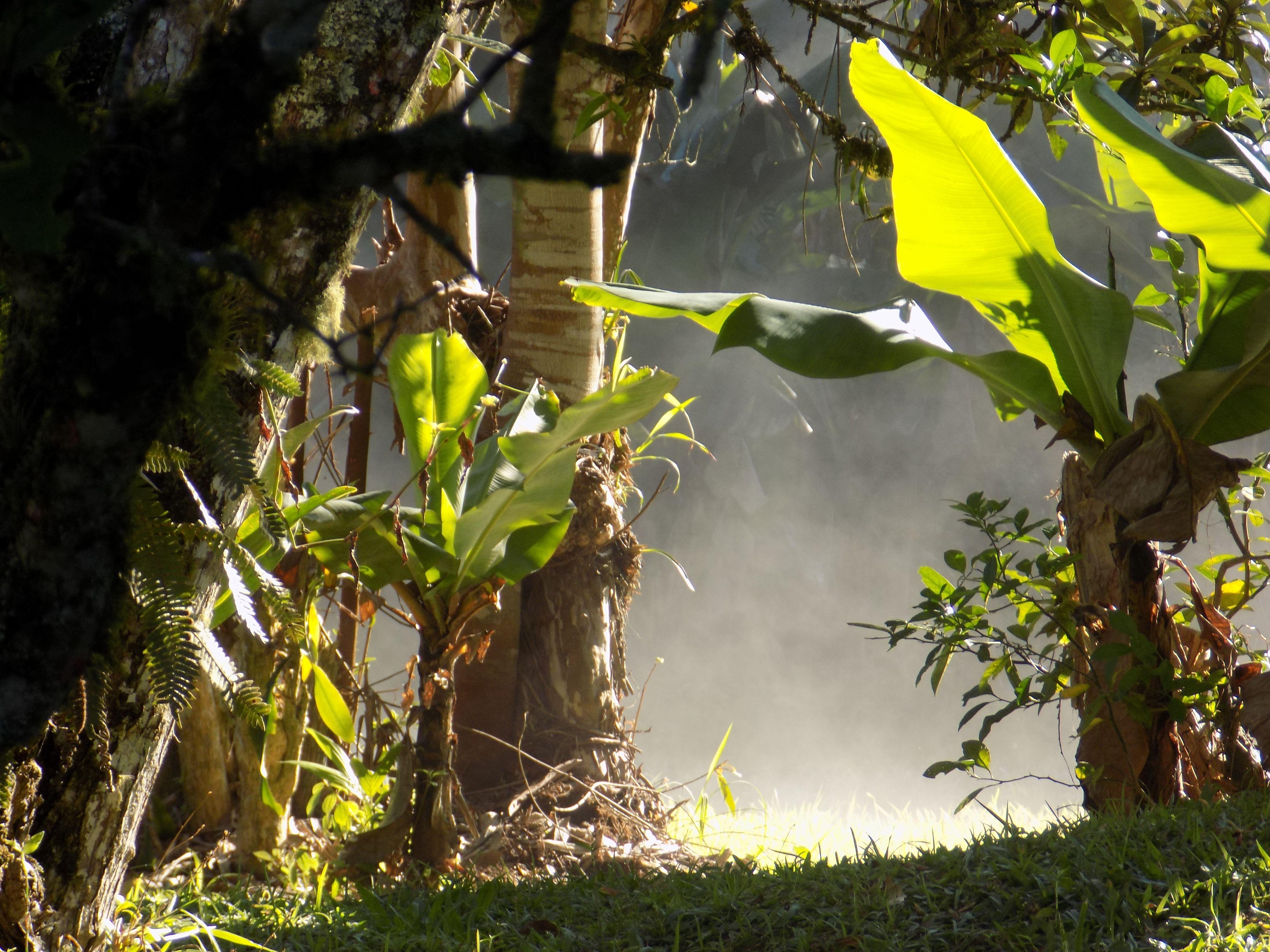 Da série: Lá do Quintal de Casa #elainegomes