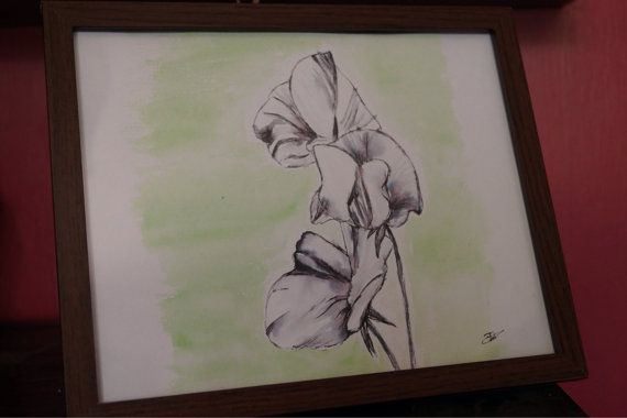 Framed watercolour and ink drawing sweet pea by FrannBPhotography, £15.00