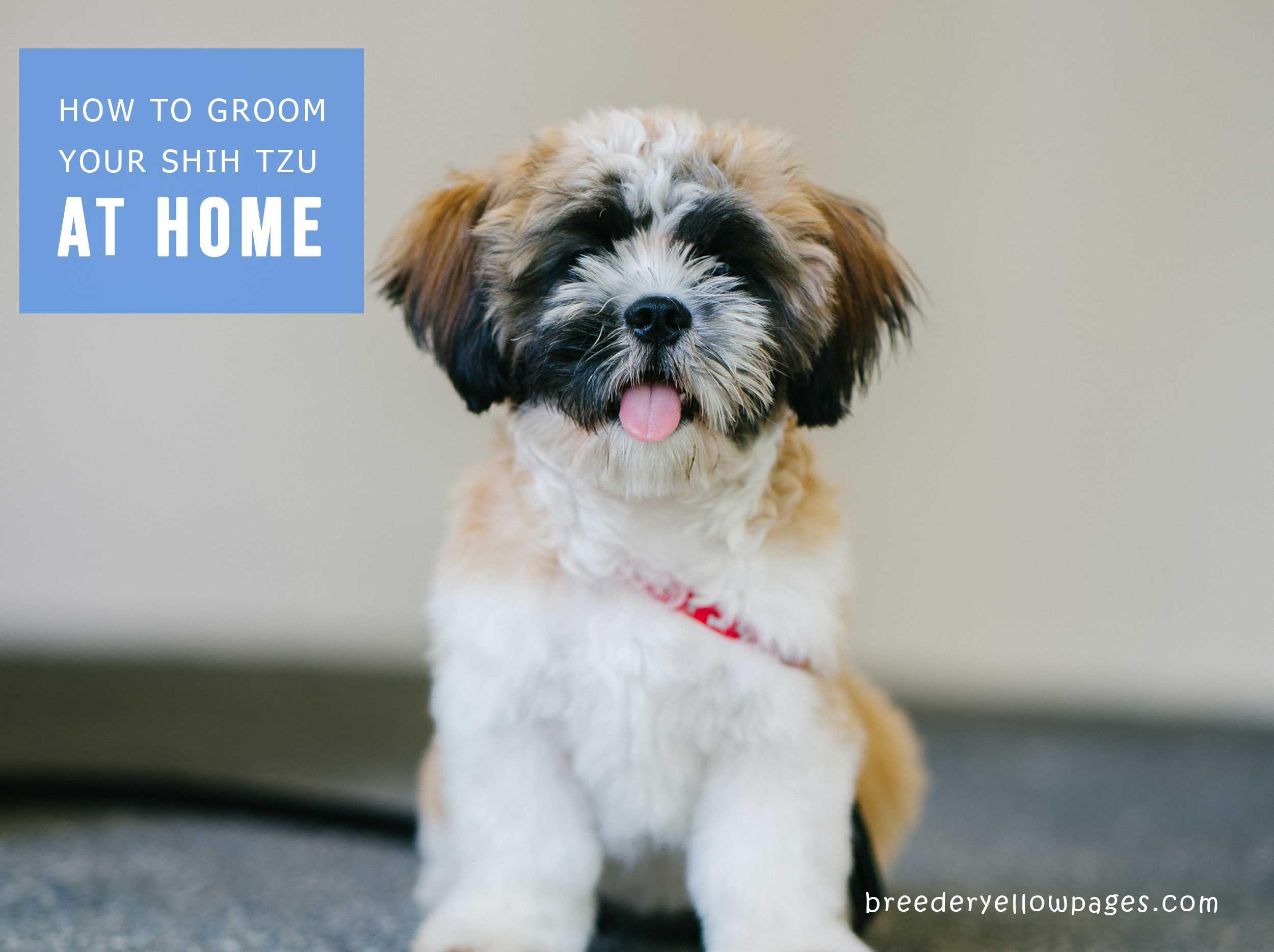 How To Groom A Your Shih Tzu At Home Shih Tzu Shih Tzu Dog