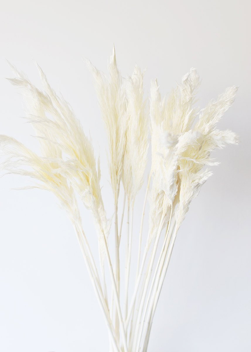 Bleached Plume Reed Grass Dried Grasses At Afloral Com Dried Flowers Pampas Grass Decor Dried Flower Bouquet
