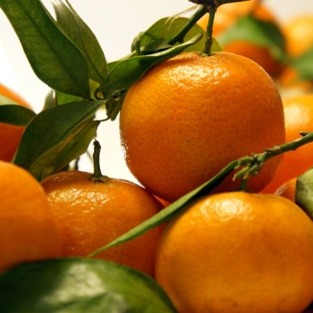 saftige clementinen foto auf leinwand drucken essen bilder fotoleinwand 20x30 120x90