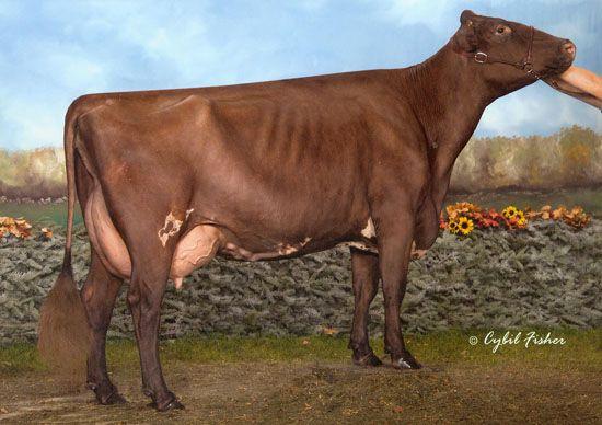 Burton Dassett Animals, Cow, England