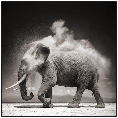 i love this picture. i love elephants