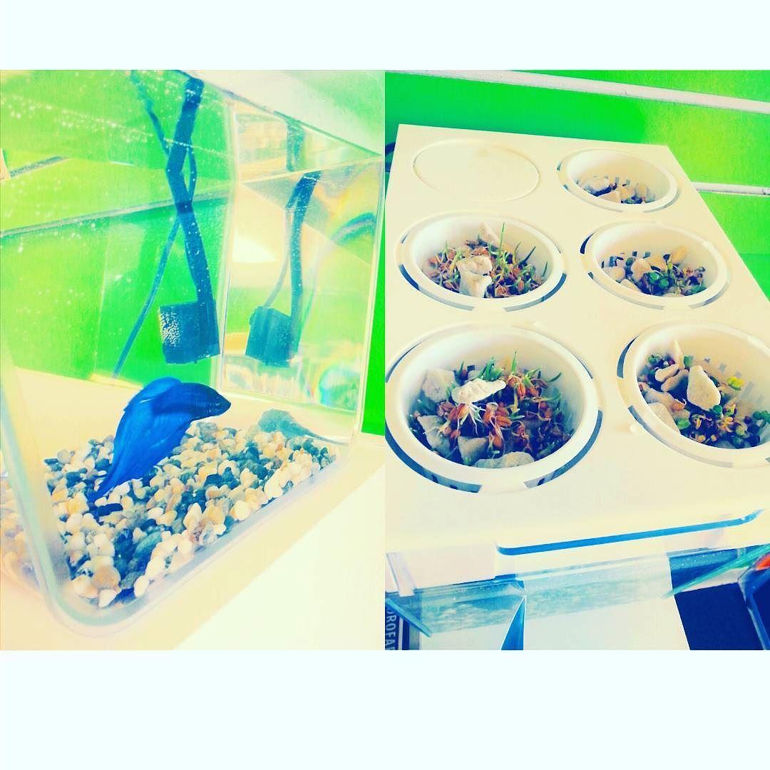 Self Cleaning Fish Tank Garden Water Garden Self Cleaning Fish Tank That Grows Food 3 Gal Fish