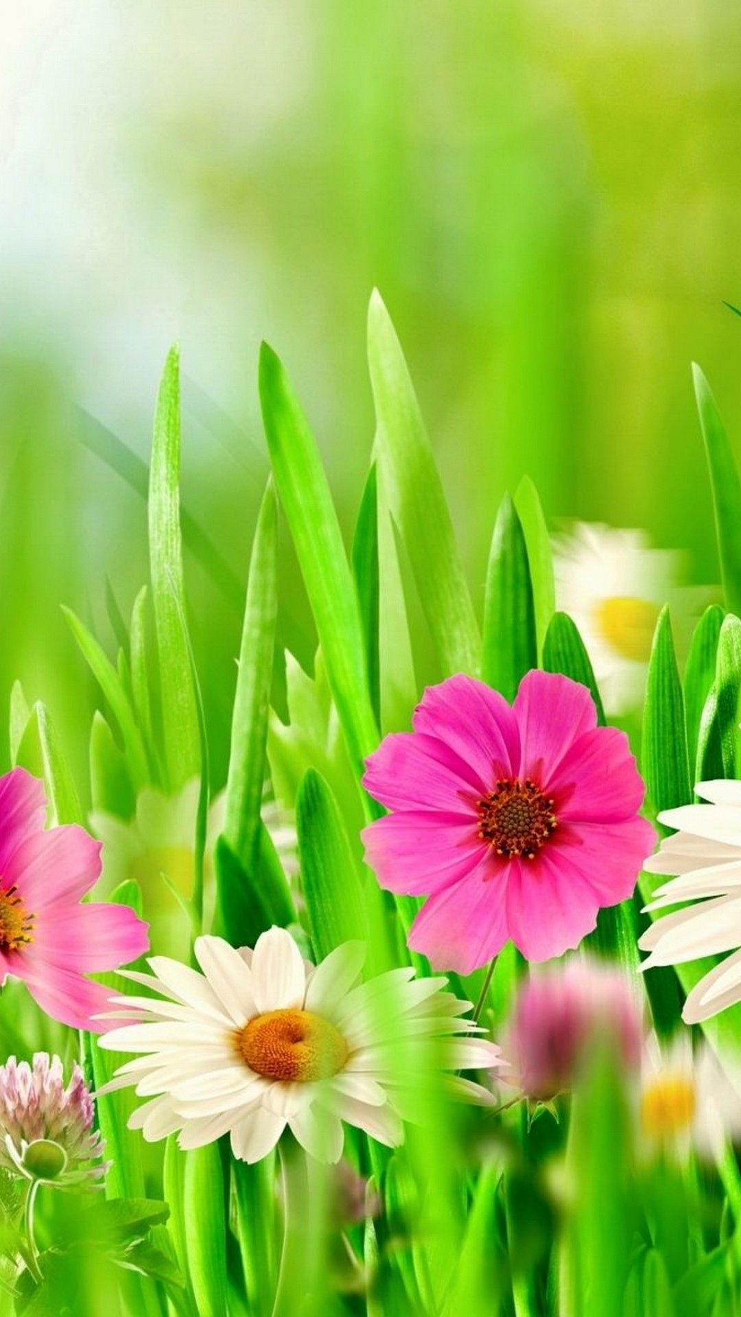 Wallpaper Spring Flowers Iphone Check more at http