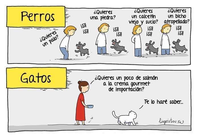 11692560 1051231958234164 2767200422991343631 N Jpg 700 484 Gato Vs Perro Gatos Perros