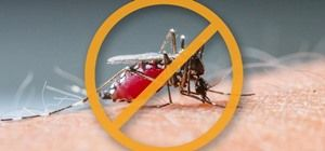 How to Keep Mosquitoes & Other Annoying Bugs Away from ...