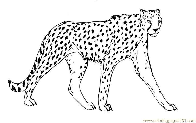 Cheetah Coloring Page Free Cheetah Coloring Pages Animal
