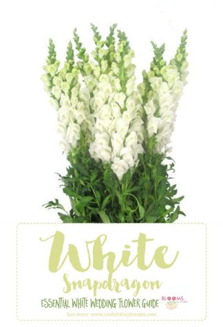 Essential white wedding flower guide names types pics white white wedding flowers guide tip white snapdragons are easy to care for and maintain making them especially perfect for the diy bride mightylinksfo