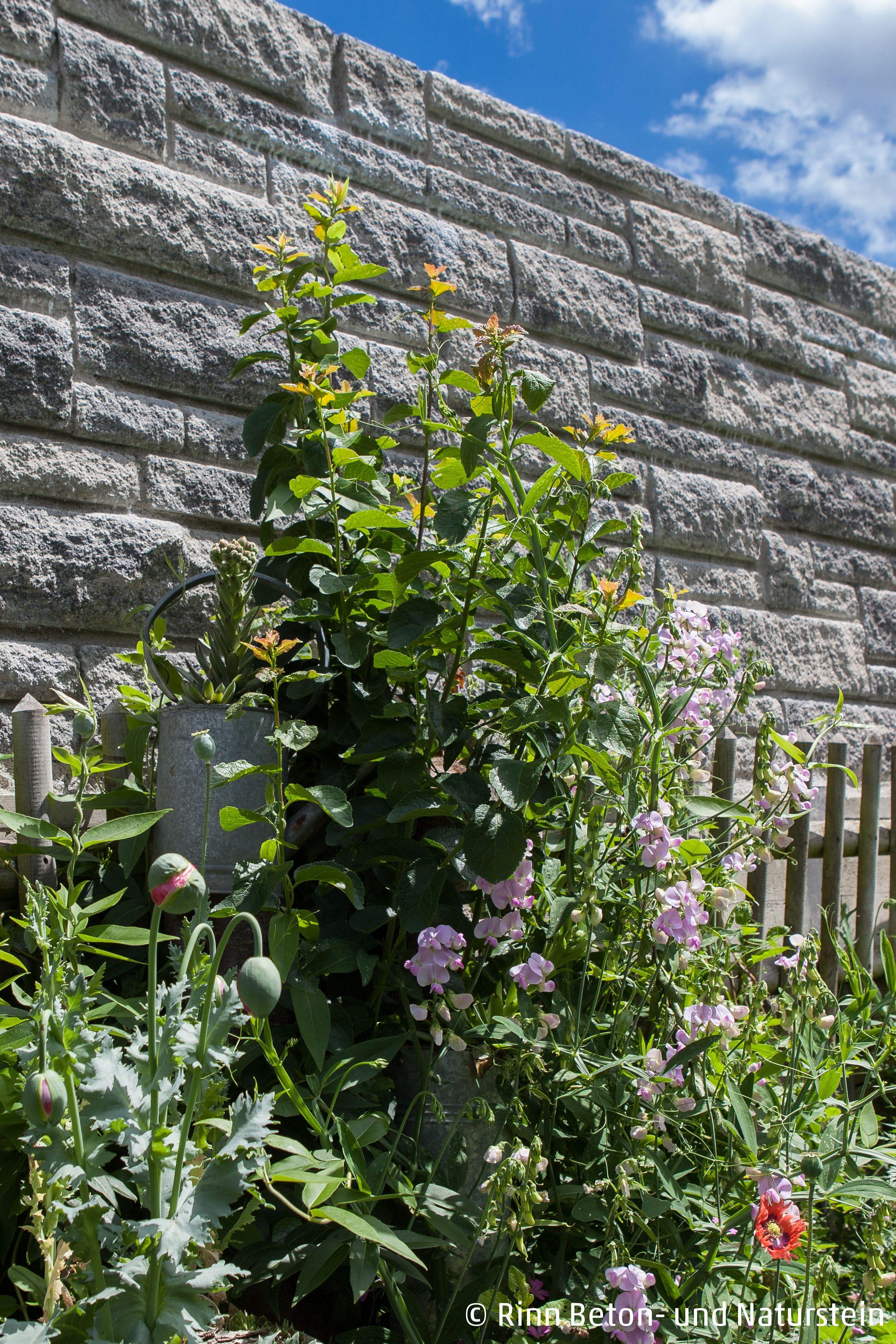 Vor Der Steinmauer Die Zur Hangbefestigung Dient Wurden Stauden Und Gewachse Gepflanzt Die Sich Am Holzzaun Entlanghangeln Gartengestaltung Stauden Gewachs