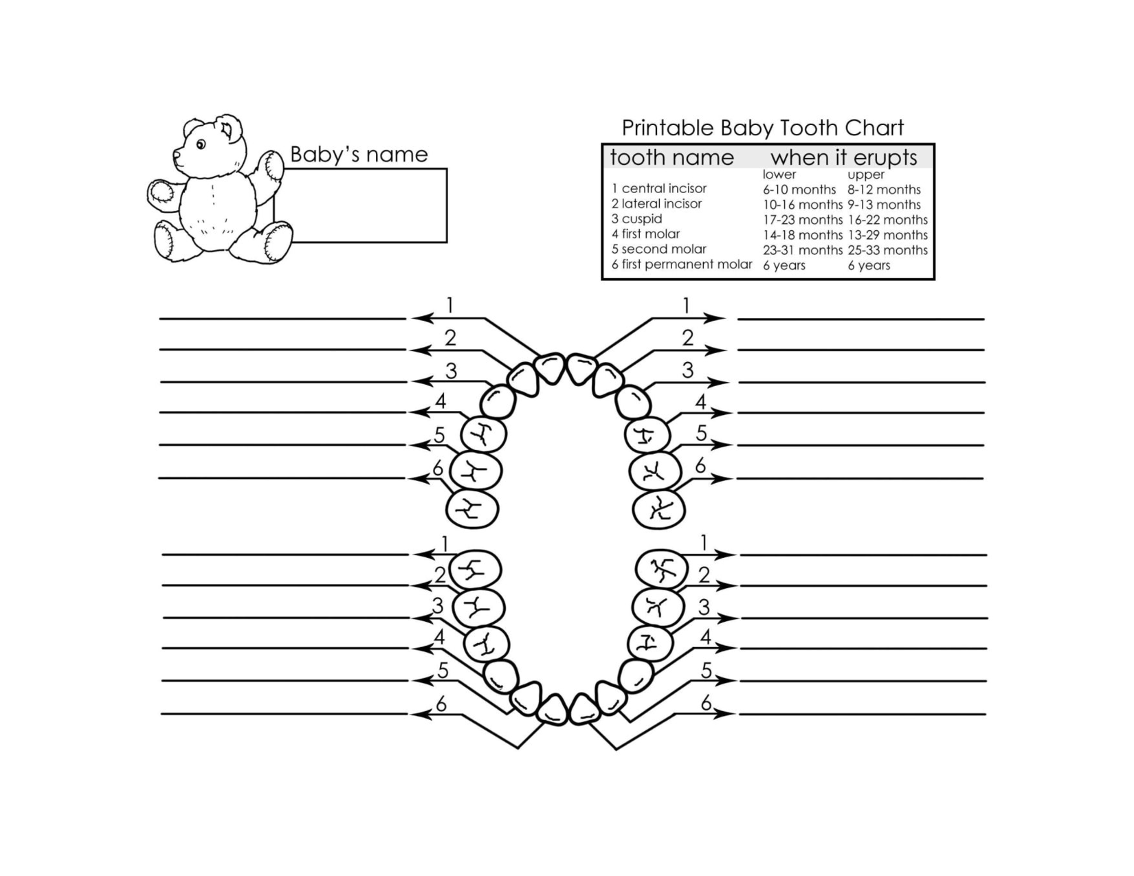 Baby teeth chart template 4 the wee 1 – Baby Teeth Chart