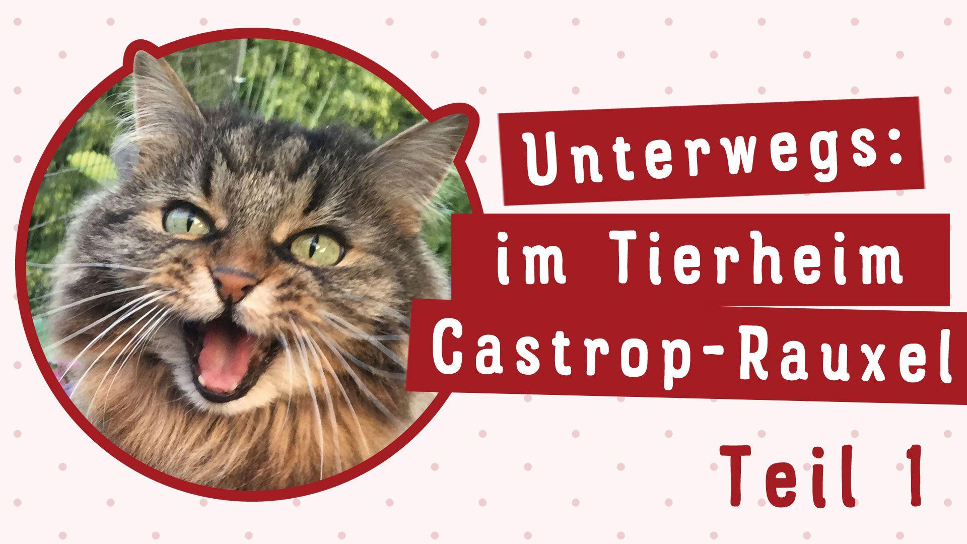 022 Unterwegs Im Tierheim Castrop Rauxel Teil 1 Katzen Katze Balkon Tierheim