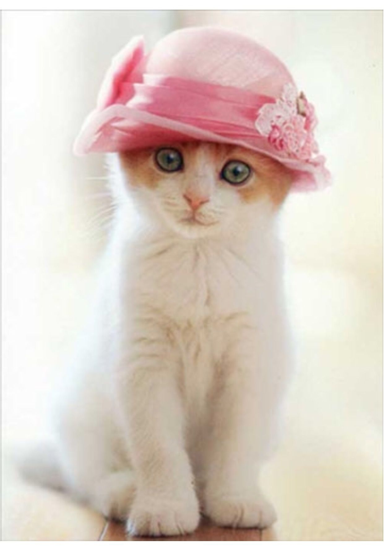 Pin By Jeanette Bellaci On In The Pink Kittens Cutest Cute Cats Pretty Cats