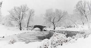 Central Park, New York  www.BoBridgesGallery.com