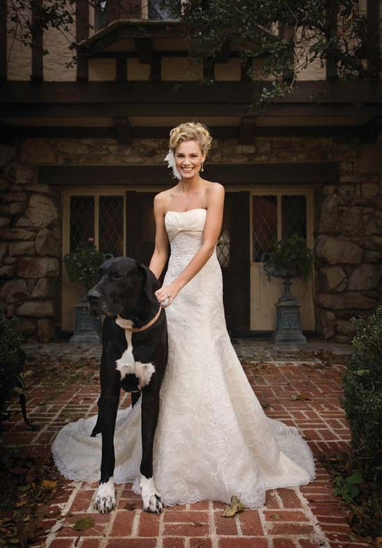 such a perfect picture, bride & dog