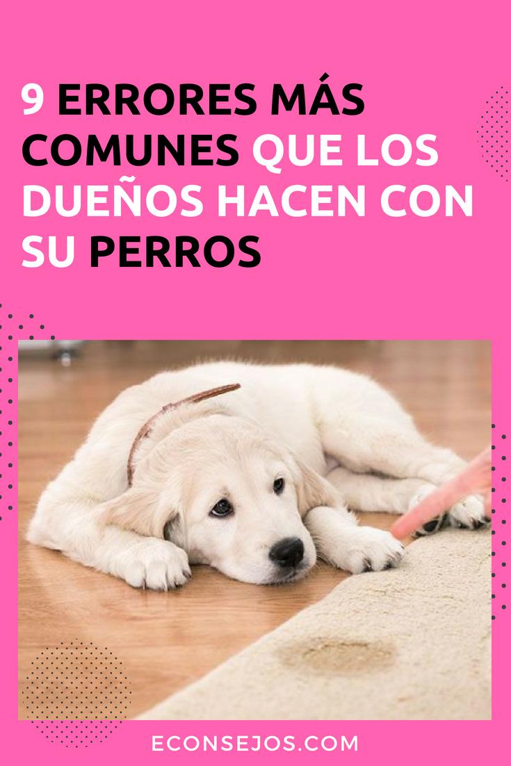 9 Errores Terribles Cometidos Por Los Dueños De Perros Dueños De Perros Champú Para Perros Perros