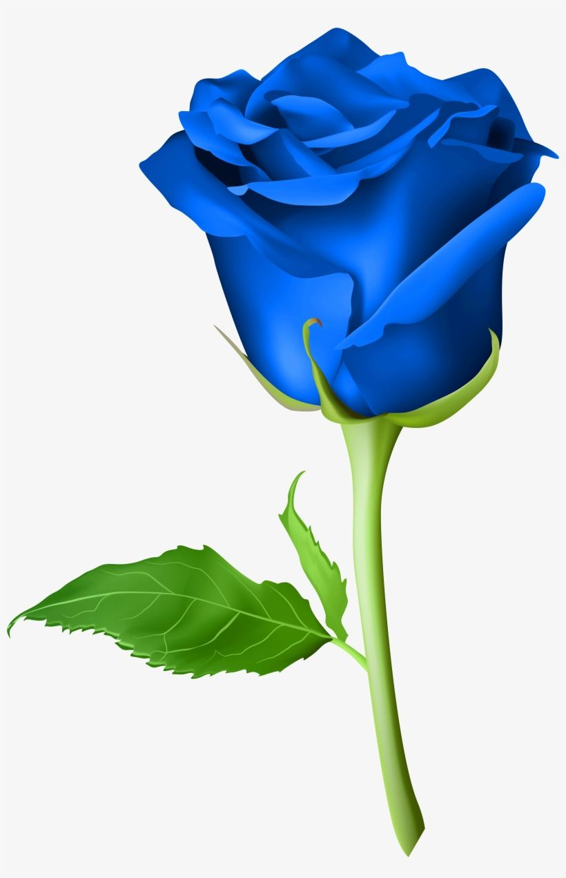 Blue Rose Flower Drawing Rose Flower Png Rose Drawing