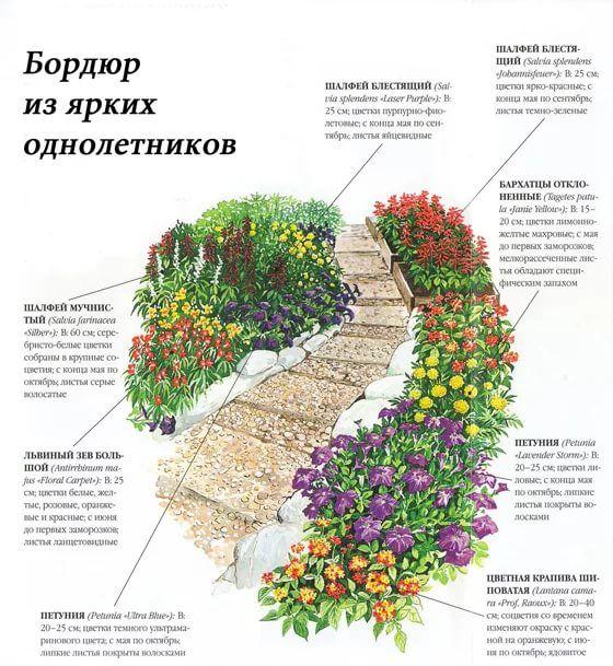 схемы цветников: 19 тыс изображений найдено в Яндекс ...