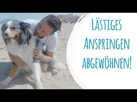 Dem Hund Lastiges Anspringen Abgewohnen Youtube Hunde