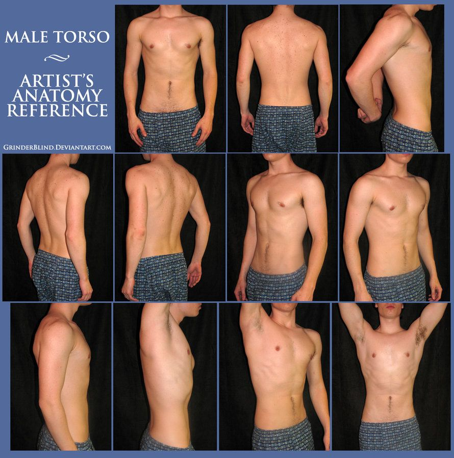 Photos Of Left Side Mans Torso Male Torso Anatomy Reference By