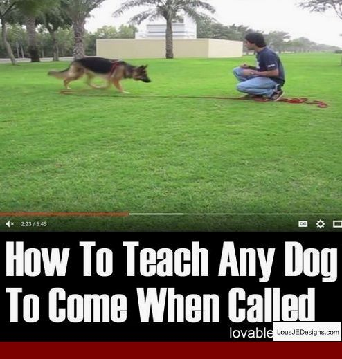 How To Train A One Year Old Dog To Pee Outside And Pics Of How To