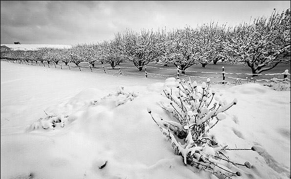 اورمیه برفی - Snowy Urmia